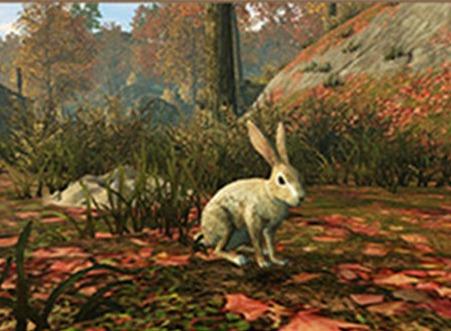 明日之后抓兔子方法分享 野兔出没抓兔子攻略